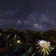 沖縄・石垣島 天の川とドラゴンフルーツの花